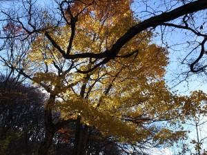 赤城山の中腹の紅葉。