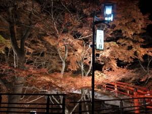 紅葉のライトアップその2。
