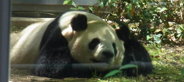 寝てます。かわいい…。